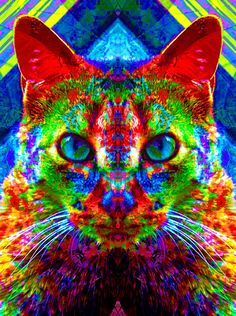 cat+artwork | Sir Parker the Chromatic Cat Art Print