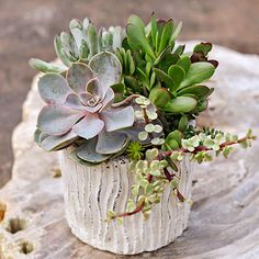 Start Small: Succulents are the perfect plants for beginners. Start with a small combo and build from there -- but don't worry about packing them in. Succulents are slow growers and don't mind being crowded. A small container like this 8-inch ceramic pot can hold six plants, no problem.