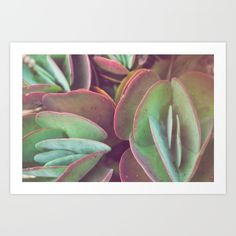 succulents succulent photography botanical botanical art