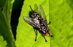 Hoe mooi een ordinaire vlieg kan zijn in het Savelsbos; Zuid-Limburg