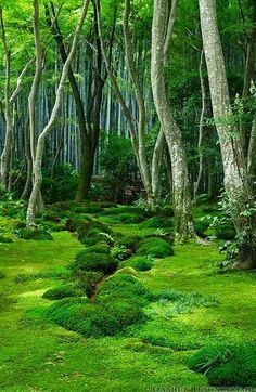 Moss garden in Giyo-ji temple (祇王寺) I just want this to be my backyard. Moss garden in Giyo-ji te Beautiful World, Beautiful Gardens, Beautiful Places, Beautiful Beautiful, Mother Earth, Mother Nature, Shade Garden, Beautiful Landscapes, Scenery