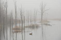 Landscapes | Still Point Gallery