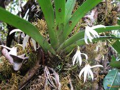 Petite orchidée sauvage