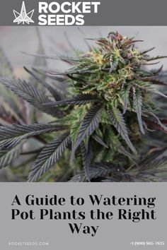 Cannabis Edibles, Cannabis Plant, Hydroponic Grow Systems, Hydroponic Growing, Hydroponics, Weed Facts, Marijuana Facts, Growing Weed