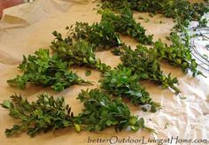 The Traditional Fresh Boxwood Wreath Tutorial-These are so fun to make and easy.  I also mixed in dogwood red twigs and other evergreens I had.