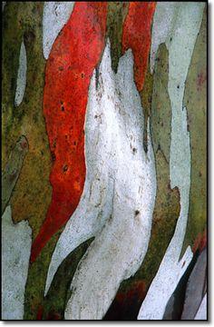 Snow gum Nature Artwork, Abstract Nature, Rainbow Eucalyptus Tree, Tree Story, Magical Tree, Australian Native Flowers, Flora Flowers, Tree Bark, Texture Art