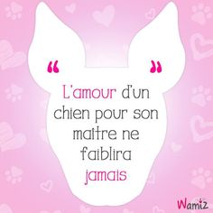 Petite phrase adorable et vrai ♡ ● ● ● Shiba Inu, Funny Dogs, Cute Dogs, Animal Quotes, Bull Terrier, Friendship Quotes, My Best Friend, Pitbulls, Dog Cat