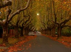 A street in Canterbury, a suburb of Melbourne, Australia. Wonderful Places, Beautiful Places, Melbourne Museum, Save Mother Earth, Autumn Scenery, Fall Pictures, Fall Pics, Beautiful Streets, Urban Setting