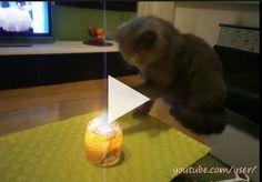 Videos mais divertidos: Conheça o gato que tem um vício nada comum
