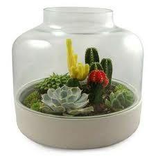 cactus terrarium - Google Search