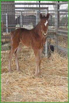 I quite like this ones facial marking  Desert Code out of Reality With Class filly foaled February 19, bred by Harris Farms.