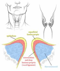 Vibration: vocal cord vibration (primary structure is the vocal cords/vocal folds and the nerves that supply them, allowing them to move; other structures are arytenoid cartilages and vocal muscles)