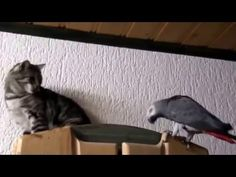 Funny animals-4 - YouTube