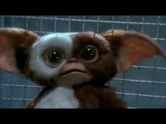 ♡ Les Gremlins, Gremlins Gizmo, Movies Playing, All Things Cute, Hollywood Star, Little Monsters, Arts And Entertainment, Film Stills, Editing Pictures