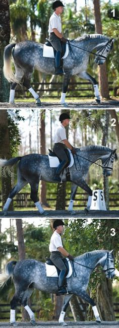 Common Horse Trot-Walk Transition Mistakes with George Williams