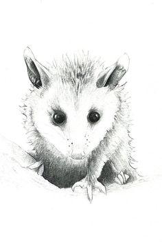 Baby Opossum Print: digital print of a drawing by marybethleonard