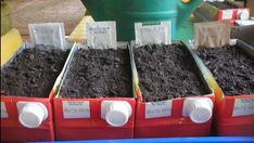 Winter Garden, Vegetable Garden, Home And Garden, Flowers, Plants, Outdoor, Gardening, Sport, Green Houses