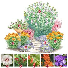 This full-sun planting has five nectar-rich plants the flying little ornaments go crazy over!