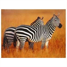 Oriental Furniture Plains Zebras Canvas Wall Art (40 CAD) ❤ liked on Polyvore featuring home, home decor, wall art, wildlife paintings, asian wall art, black and white canvas wall art, oriental paintings and black white canvas paintings