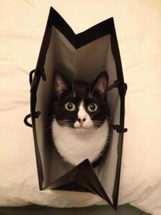 """""""It's easier to let the cat out of the bag than to get it back in again."""" --Mark Twain"""