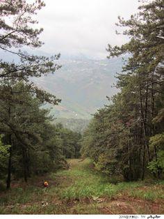 台灣百岳 - 大劍山的防火巷 Hiking at Mountain Dajian - Nantou, TAIWAN