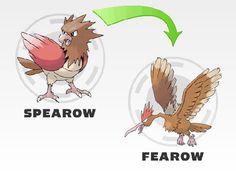 Spearo evolution