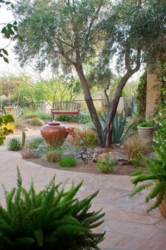 Arizona · Courtyard · Desert Landscape Design Ideas, Pictures, Remodel, and Decor - page 7