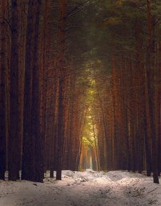 See my earlier post about finding this place...by Andrew Balabin. Russian Forest.