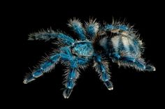 Spider,had been used the software to change color...like red.yellow.pink...  National Geographic