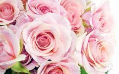 Pink roses...love!!!