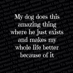 I love my dog. She is my goofy, funny, loving, furry friend. I can't imagine being without her. Love My Dog, Puppy Love, Love My Life, Jiff Pom, Petit Basset Griffon Vendeen, Goldendoodles, Cavachon, Labradoodles, Maltipoo