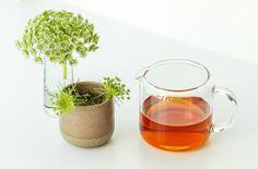 My tasting notes: Jing Mai Ancient Black Hong Cha — The Tea Squirrel