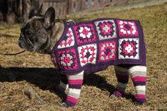Ihan oikea blogi? virkkasi koiralle säärystimet ja takin Novita 7 Veljestä -langasta isoäidinneliöinä - viehättävä asu ja säärystimetkin pysyvät menossa mukana henkselien avulla!