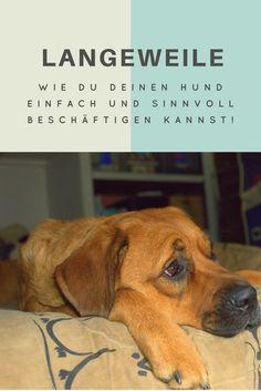Kein Hund sollte Langeweile haben, wenn Beschäftigung so einfach und spaßig ist