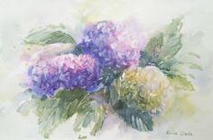 255 x Watercolours, Hydrangea, Watercolor Paintings, Wildlife, African, Birds, Water Colors, Hydrangeas, Bird
