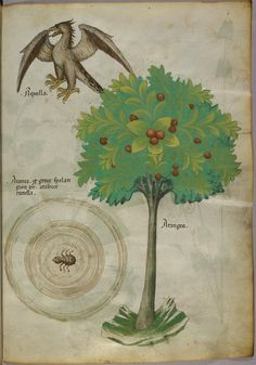 Codex Sloane 4016 is a 15th century Italian parchment manuscript belonging to a class of books known as herbals