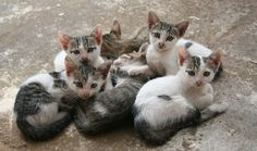 kittens outdoors http://ift.tt/2y8CQzQ