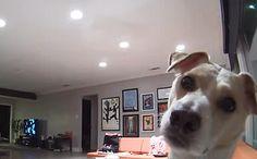 Daily Cute: Curious Dog Discovers Secret Camera