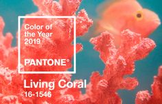 Destacada-Living-Coral-Pantone-2019 Live Coral, Mid Century House, Home Decor Inspiration, Beautiful Homes, Pantone, Self, Nice Houses, Paint Chips