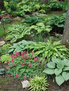 Shade Garden.