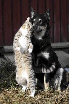 Luumu-kissa ja Veela-koira   (via Minna Nurmela   http://www.pinterest.com/pin/396387204673737458/ )     Hyvää eläinten päivää! -  Hyvää eläinten viikkoa 4.-10. lokakuuta! -  Happy Animal Day! -  Happy Animal week 4-10 October! --  http://fi.wikipedia.org/wiki/El%C3%A4inten_p%C3%A4iv%C3%A4   http://www.sey.fi/seytoimii/nuorisotoiminta/elainten-viikko