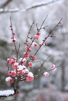 branche fleurs neige