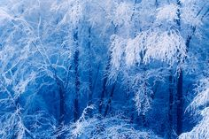 frosted forest by stephan_amm, via Flickr