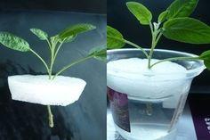 Sweet home : Nipp taimede kasvatamiseks Plant Design, Planting Seeds, Permaculture, Hydroponics, Herb Garden, Horticulture, Compost, Houseplants, Indoor Plants