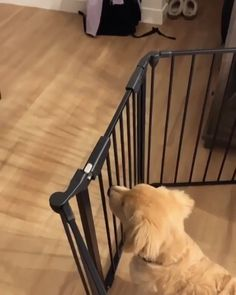 When hoomans return dwelling Comply with for additional . Cute Funny Dogs, Cute Funny Animals, Cute Cats, Cute Dogs And Puppies, I Love Dogs, Doggies, Pet Dogs, Beautiful Dogs, Animals Beautiful