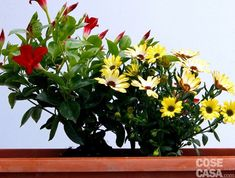 Plant Care, Terrazzo, Flower Arrangements, Flowers, Plants, Estate, Home Decor, Gardening, Houses