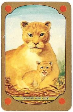 VINTAGE COLES SWAP PLAYING CARD - x 1 named LIONESS AND CUB