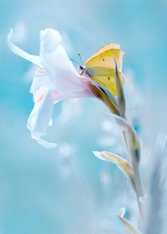 """Butterfly: """"Fly, fly little wing ~ fly beyond imagining..."""" (Photo By: Magda Wasiczek on 500px.)"""