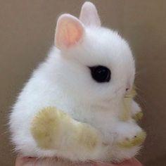 .@adorable_animals | How sweet! Double tap and follow @p_u_r_p_l_e @p_u_r_p_l_e | Webstagram