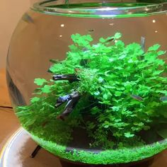 A Place to Learn All About Aquascape Aquarium Garden, Mini Aquarium, Nature Aquarium, Aquarium Fish Tank, Planted Aquarium, Indoor Water Garden, Indoor Plants, Freshwater Aquarium Shrimp, Water Terrarium
